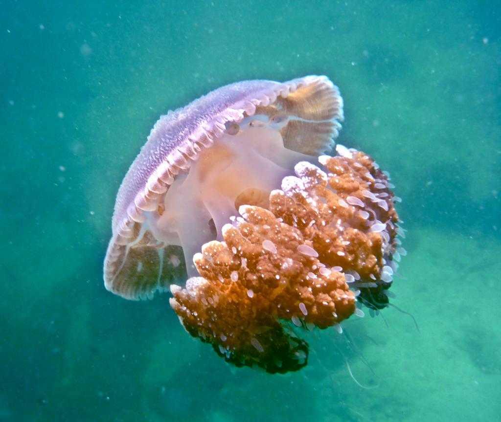 гирлянду медузы в тайланде фото трогательные пожелания
